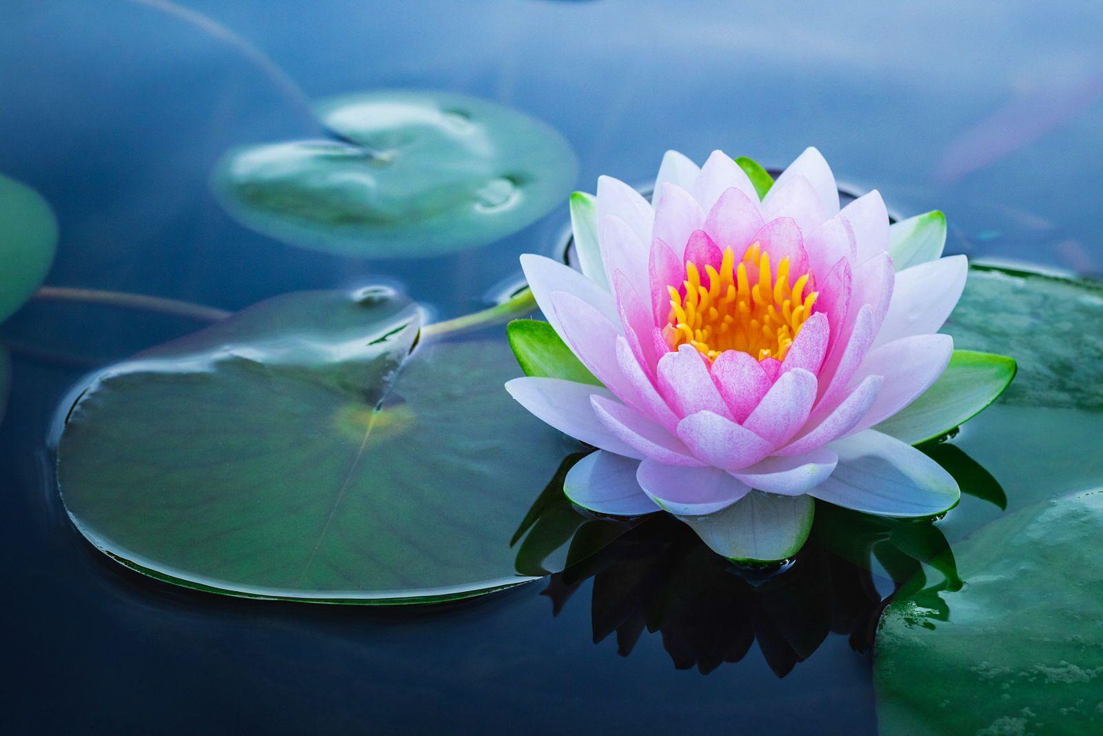 Propose massage shiatsu de bien être