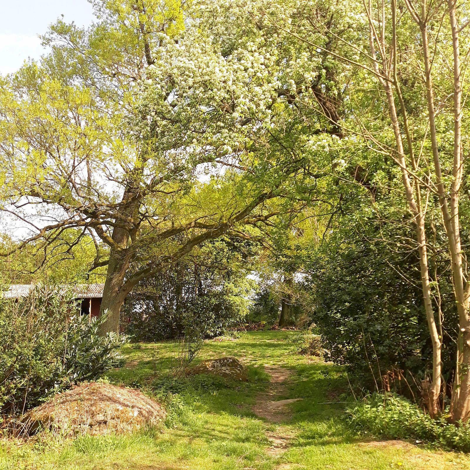 Propose service entretien jardin et maison sur Tours et alentours