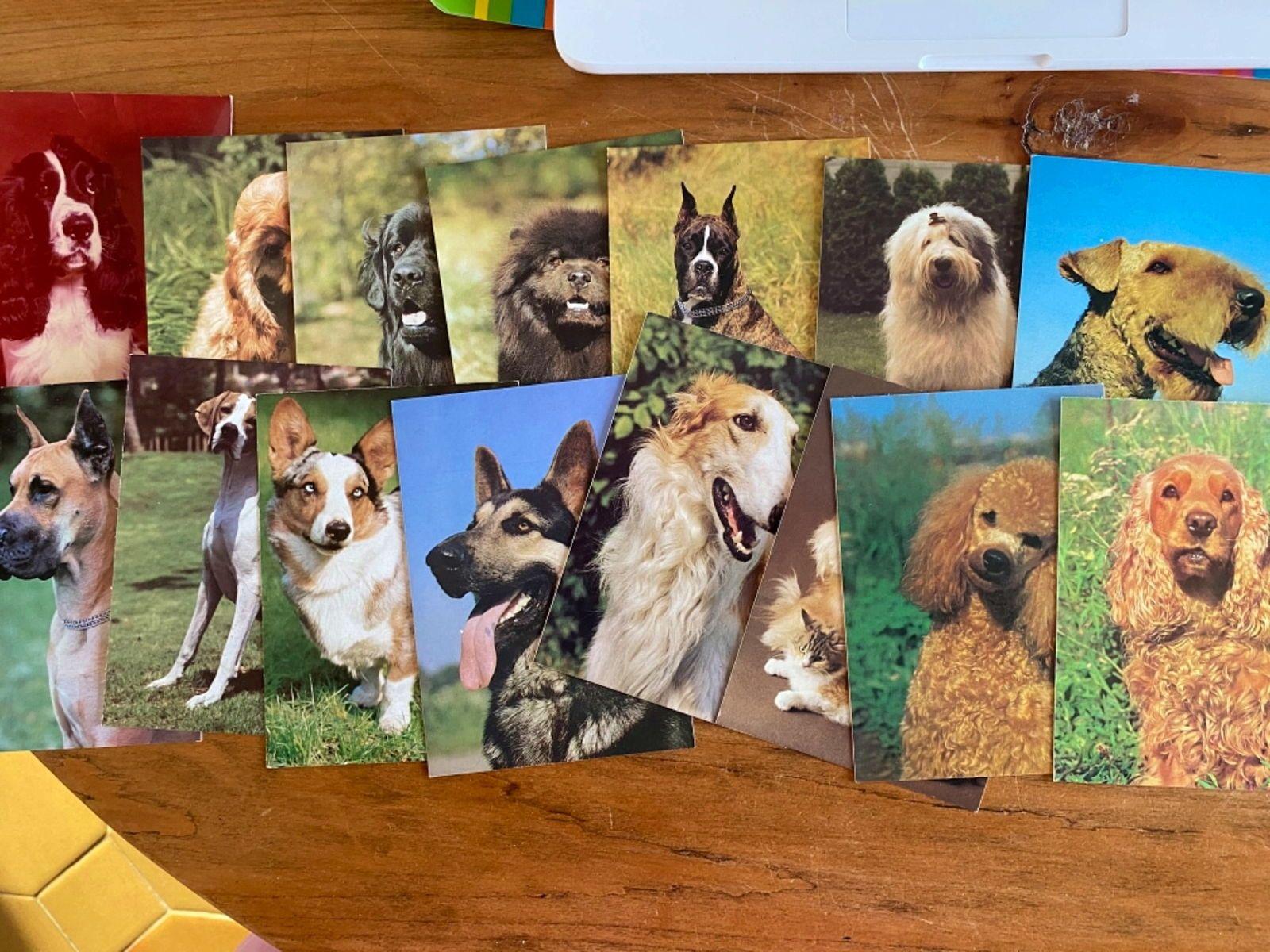 40cartes postales sujet le CHIEN