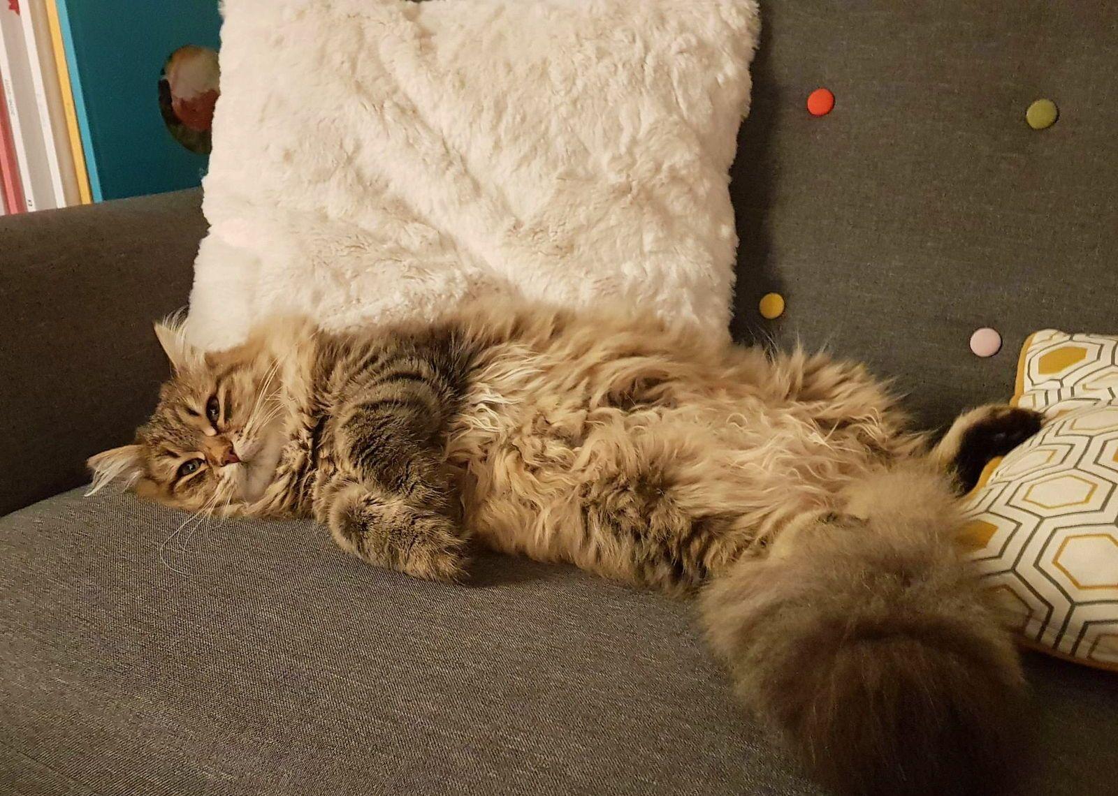 Prête appartement Rueil contre garde de chat- août 2021