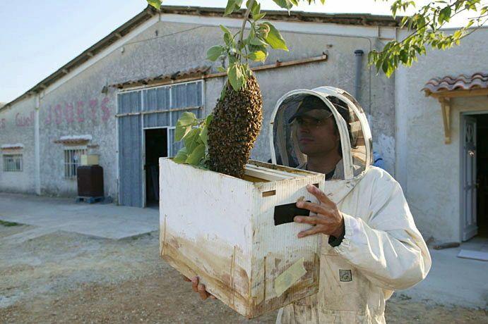 Propose intervention pour récupération d'essaim d'abeilles